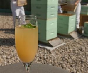 В отелях Fairmont установлены пчелиные ульи