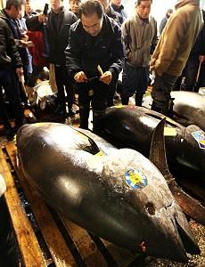 Гигантский тунец продан за 396 тысяч долларов