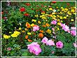Дизайн садового участка: как подобрать цветы