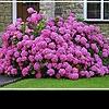 Декоративные кустарники: разнообразие цветов и форм