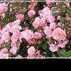 Цветники: нежная радуга ландшафта