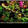 Палюдариум: оздоравливающая вазочка с болотом