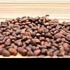 Кедровые орехи: лесные лекари